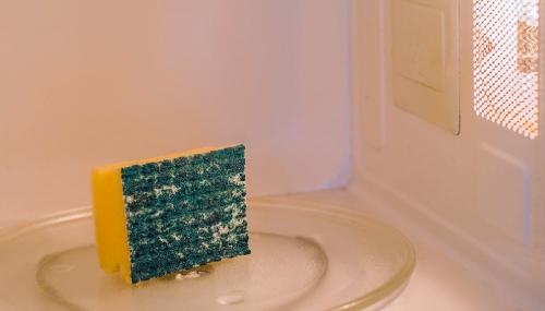 bacterias en las esponjas